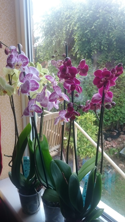 Orchids – the ultimate decorating flower